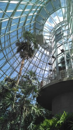 San Antonio Botanical Garden: Palm and cycad pavilion - gorgeous!
