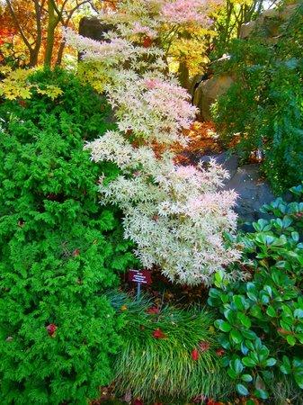 Royal Tasmanian Botanical Gardens: japanese garden with the colours of autumn