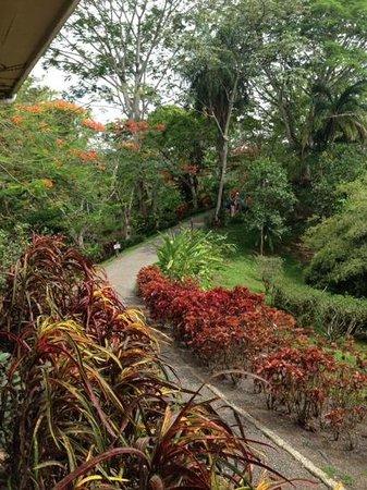 Pura Vida Gardens and Waterfalls : Pura Vida  Gardens