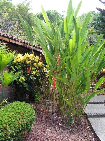 Forest Hills Suites : Jardin