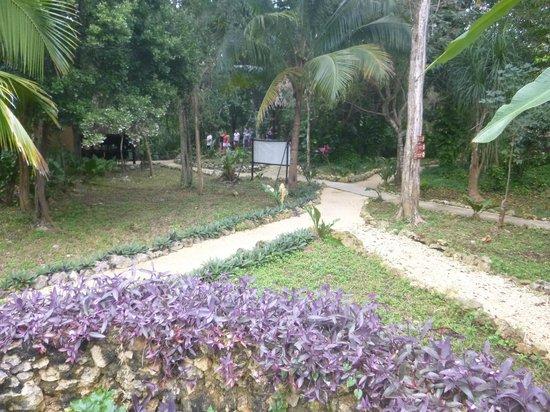 Mayan Jungle Tour: Sendero