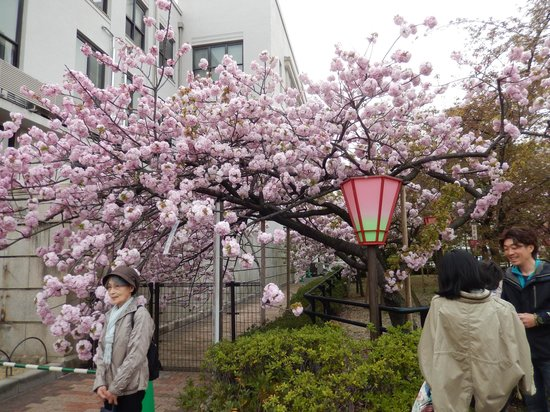 Zohei Museum : Lovely pink bloom