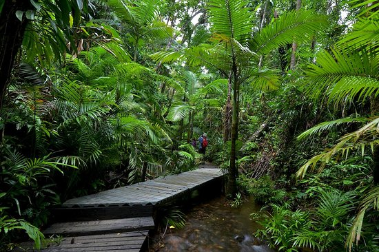 Lync-Haven Rainforest Retreat, Cabins, Camping & Wildlife Experience: board walk