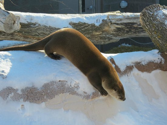 Red River Zoo: North American River Otter
