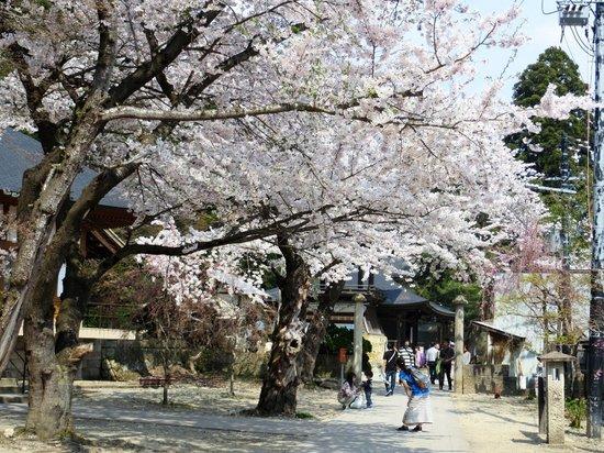 Risshaku-ji Temple: 立石寺と桜