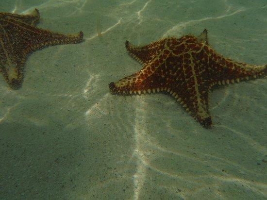 Cayman Eco Adventures: Starfish Beach