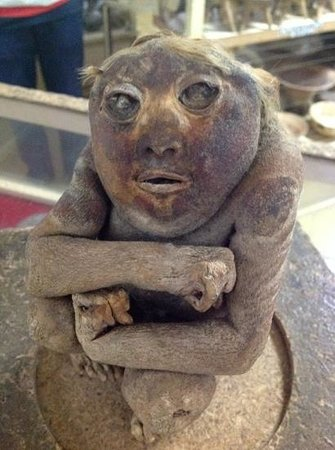 Casinelli Museum (Museo Arqueológico Casinelli) : Mummified foetus