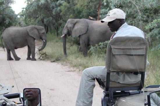Kapama Southern Camp: Elefantes