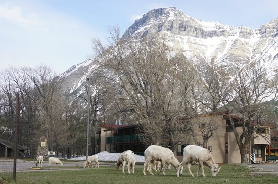 Waterton Lakes Lodge Resort: Meet the neighbors