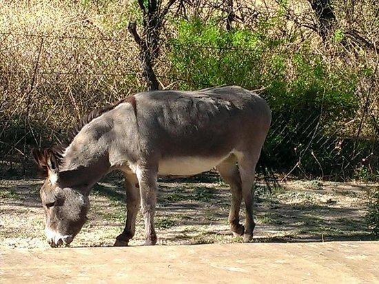 Lazy Dog Ranch : Magdalena the donkey