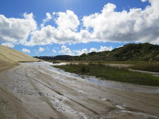 Sand Safaris Cape Reinga 90 Mile Beach Tours : The beach