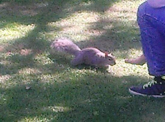 Lancaster Hall Hotel: zutrauliche Eichhörnchen im Hyde Park - Nüsse mitnehmen!
