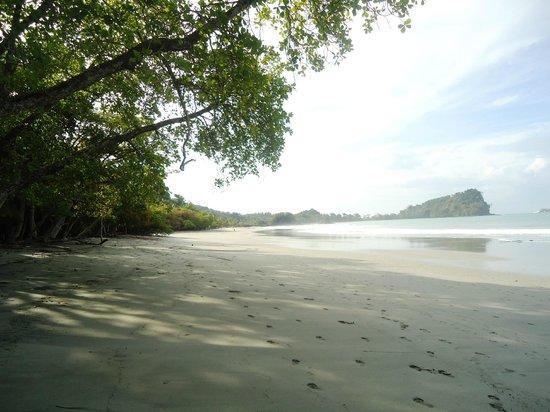 Arenas del Mar Beachfront & Rainforest Resort: Esparilla beach