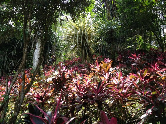 Princesa de la Luna Eco Lodge: Garden on lodge grounds
