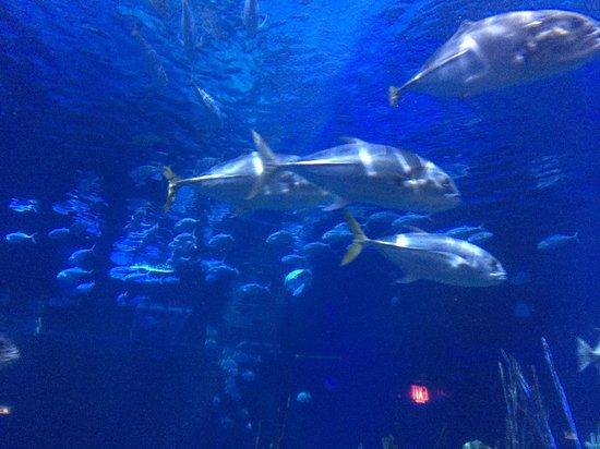 Epcot: So many fish!