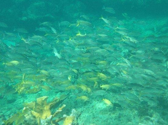 Pat & Diane Snorkeling : Live Reef lots of fish beautiful colors!
