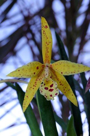 Tucson Botanical Gardens: Plants