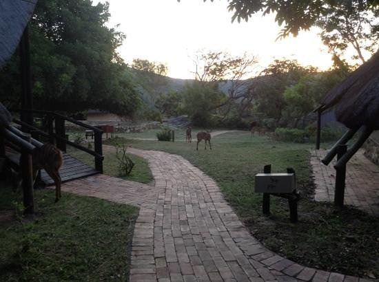 Bongani Mountain Lodge: Inyalas grazing on the property