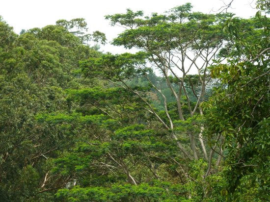 Hantana Home Stay: a view from room