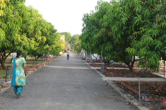 Sukhsagar Gir Resort: HOTEL
