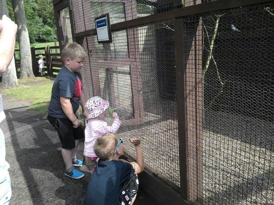 Sewerby Hall and Gardens : my kids enjoying the animals