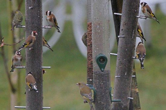 Birds Ireland Workshops & Tours: Eric's garden birds