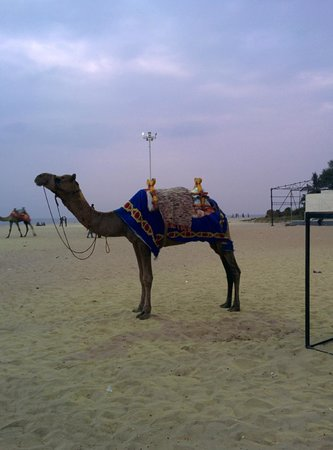 Alappuzha Beach: camel ride available on beach