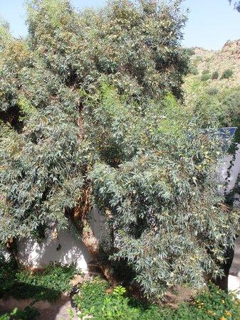 Hotel Villa Enrica - Country Resort: Eucalyptus tree