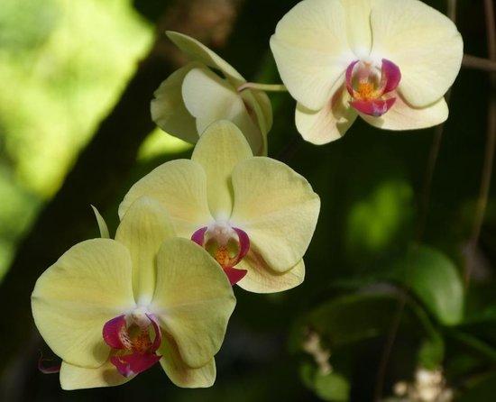 Velidhu Island Resort : i fiori