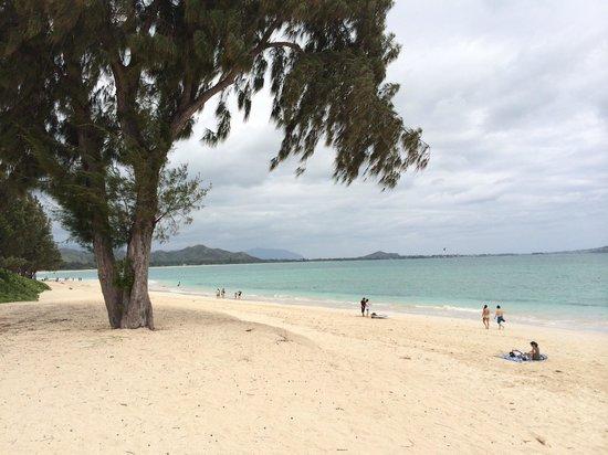 Kailua Guesthouse: カイルアビーチ