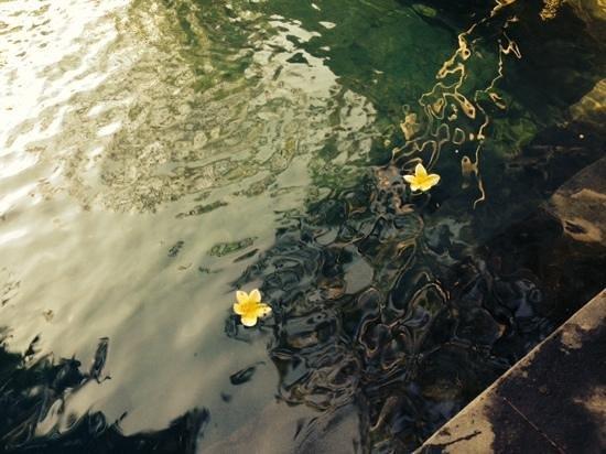 Ubud ArtVilla : flower in the pool