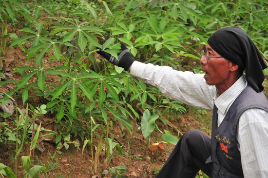 Hue Riders : Mr. Dung describing a local crop in the mountains.