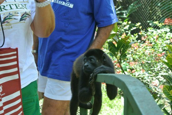Costa Rica Wildlife Sanctuary: Spider monkey hanging out