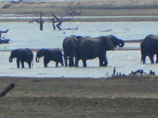 Wildlife Camp: jede Menge Elefanten