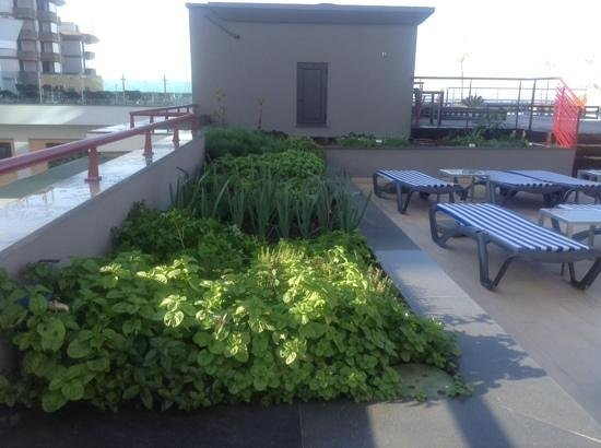 Four Views Monumental Lido: The herb garden
