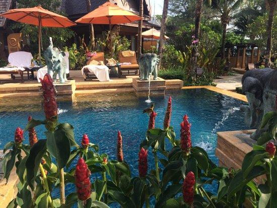 Amari Vogue Krabi: Pool area, spot the humming bird