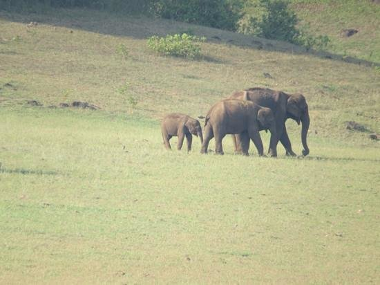 KTDC Lake Palace Thekkady: elephant calves