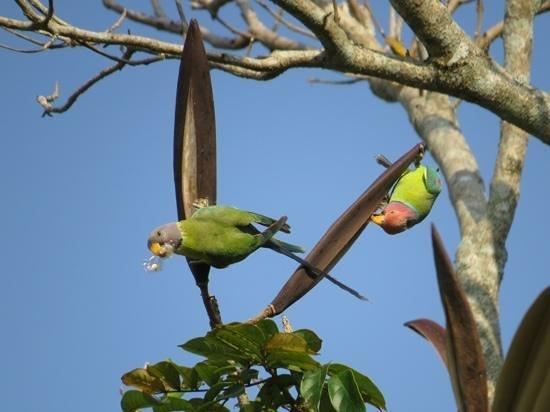 KTDC Lake Palace Thekkady : parrots