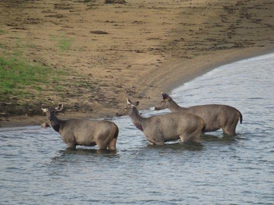 KTDC Lake Palace Thekkady: deer