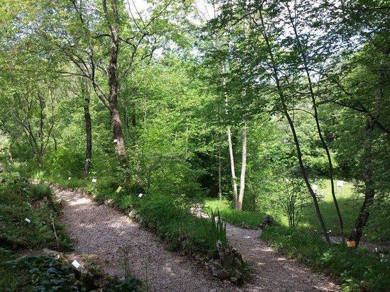 Giardino Botanico Carsiana: Due dei sentieri principali
