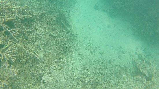 Blue Bay Beach: Remains of corals at Blue Bay