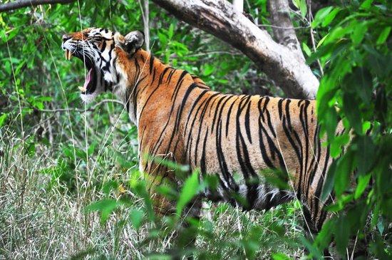 The Oberoi Vanyavilas : Tiger Spotting at Ranthambhore