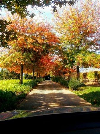 Rust en Vrede Restaurant: Drive to Rust en Vrede in Autumn