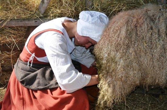 Mary Arden's Farm: Sheep Milking Demonstration