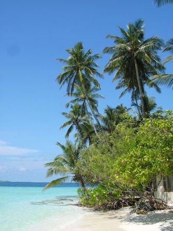 Biyadhoo Island Resort : Strand