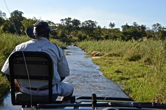 Londolozi Founders Camp: Axon tracking