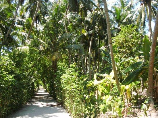 Biyadhoo Island Resort: Ringweg