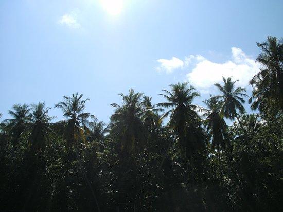 Biyadhoo Island Resort : Palmen-Sonne