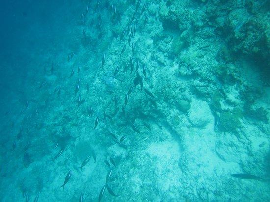 Biyadhoo Island Resort: Unterwasserwelt