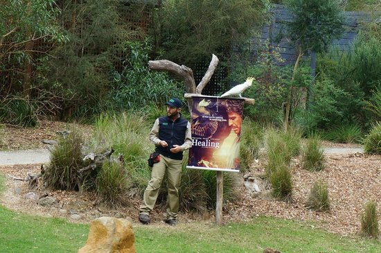 Healesville Sanctuary: Birds of prey show